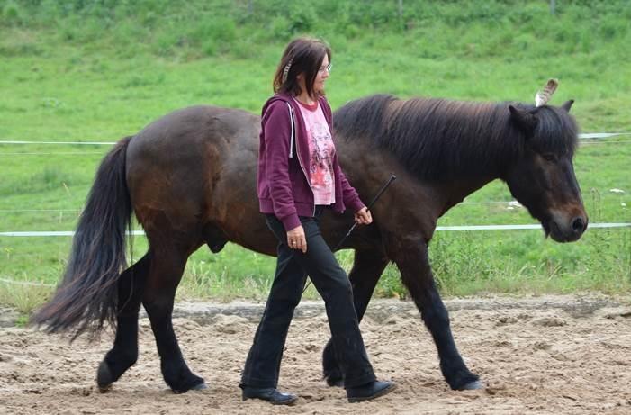 Bellzett Seminar für Frauen mit führungskompetenzen mit hilfe von pferden stärken